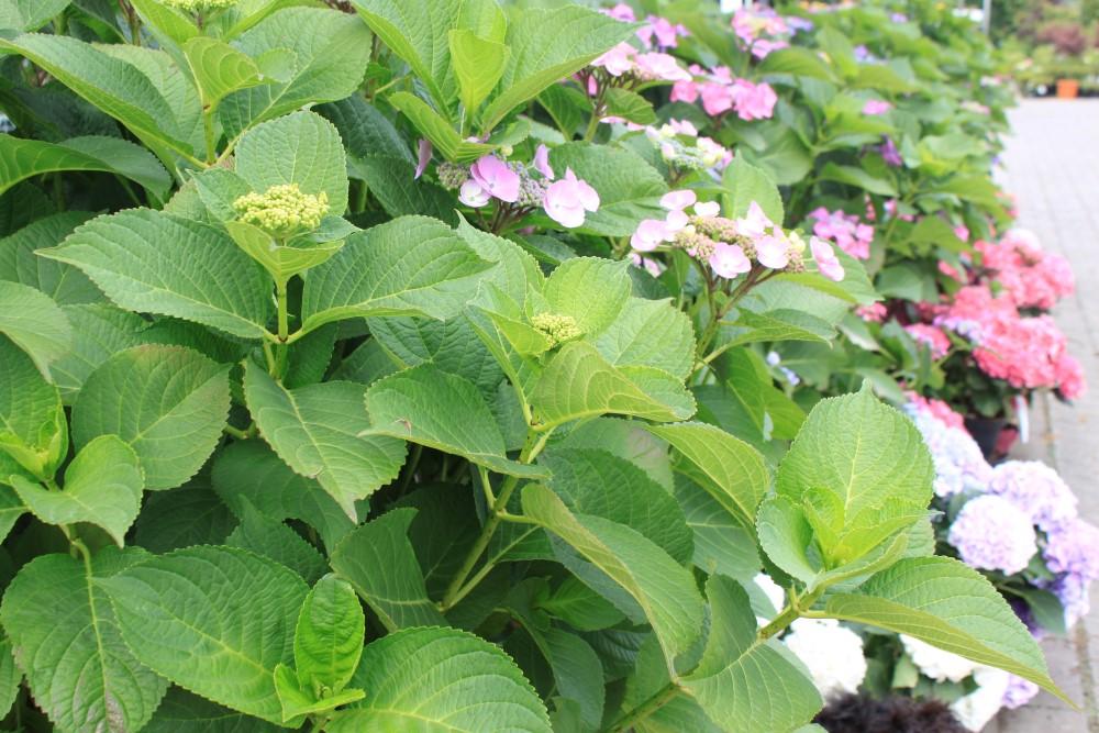 Pflanzen vester neustadt weinstra e bad d rkheim landau for Pflanzen lieferservice